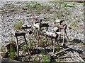 SU0169 : Wooden reindeers by Michael Dibb