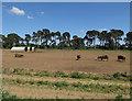 TL7391 : Outdoor pigs by Hugh Venables