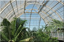 TQ1876 : Inside the Palm House by Anthony O'Neil