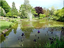 SU9185 : The water garden at Cliveden by Graham Hogg