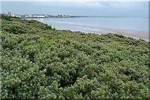 ST3050 : View over dunes towards Burnham-on-Sea by David Martin