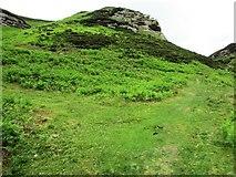 NO1805 : Edge Head, Lomond Hills by Bill Kasman