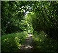 TF8409 : Peddars Way near Dalton's Plantation by Mat Fascione