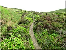 NO1905 : Old path past Edge Head, Lomond Hills by Bill Kasman