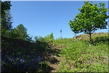 NY3404 : Tree and bluebells by DS Pugh