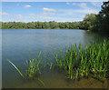 TL3369 : Drayton Lagoon, Fen Drayton Lakes by Hugh Venables