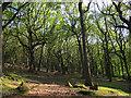 SE1937 : West Wood, Calverley by Stephen Craven
