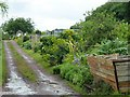 ST7465 : Lower Common Allotment Gardens in Bath by Richard Humphrey