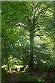 SX6479 : Bridleway, Ringhill by Derek Harper