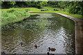 SO2800 : Nant-y-Gollen Ponds, Pontypool Park by M J Roscoe
