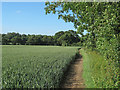 TL6504 : Public footpath on wheat field margin, Edney Common by Roger Jones