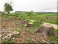 SJ2039 : Tree stumps near Pen Lan by Stephen Craven