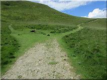 NO1906 : Path to West Lomond by Bill Kasman