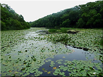 SR9694 : Bosherton lily ponds by Steve  Fareham