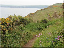 SM7709 : The Pembrokeshire Coast Path near High Point by Dave Kelly