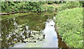 J3067 : The River Lagan at the Drum Bridge, Dunmurry (June 2017) by Albert Bridge