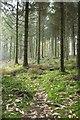 SX0068 : Access woodland, Hustyn Wood by Derek Harper