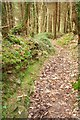 SX0069 : Path, Hustyn Wood by Derek Harper