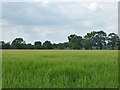 TM1073 : Field of barley by Robin Webster