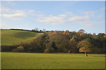 ST0104 : Woodland in the Culm Valley by N Chadwick