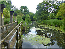 TM0855 : River Gipping at Hawks Mill By-pass Weir by Robin Webster