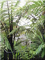 NS1385 : Inside Benmore Fernery by M J Richardson