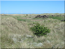 NZ5626 : Dunes southwest of Coatham Sands (2) by Mike Quinn