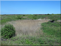 NZ5626 : Dunes north of the (former) Redcar steel works (2) by Mike Quinn