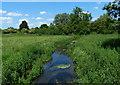 TF8215 : The River Nar near Newton by Mat Fascione