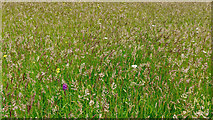 NR3693 : Wildflower meadow, Colonsay by Julian Paren
