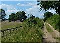 TF8312 : Peddars Way at Great Palgrave by Mat Fascione