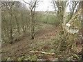 NX4137 : Looking Down In To Broad Lane Wood by Jon Alexander
