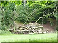 NZ2567 : Felled trees in Paddy Freeman's Park by Oliver Dixon