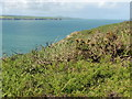 SM8836 : The Pembrokeshire Coast Path near Pwllcrochan by Dave Kelly