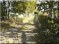 NJ6509 : A lane eastwards past Mains of Shiels by Stanley Howe