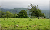 NY3204 : Grazing land with leaning tree by Trevor Littlewood