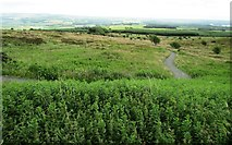 NO2505 : Path leaving Purin Hill car park, Lomond Hills by Bill Kasman