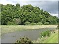 NS9785 : Reedy pond by the Fife Coastal Path by M J Richardson