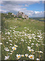 SD4972 : Ox-eye daisies on Warton Crag by Karl and Ali