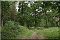 TL9367 : Footpath north through Pakenham Wood by John Myers