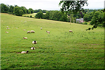 ST1536 : Sheep on the Quantock Hills by Bill Boaden