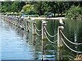 TQ2782 : A row of gulls in Regent's Park by Richard Humphrey