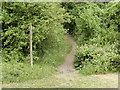 SP0747 : Footpath, Cleeve Hill by David Dixon