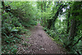 ST1535 : Woodland path above Triscombe by Bill Boaden