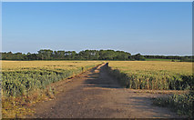 TM4494 : Farm track through Wheat Field, near Mill House, Aldeby by Roger Jones