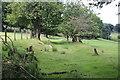 SO1702 : Grass track, Ysgubor-newydd by M J Roscoe