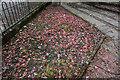NH7069 : Poppies at the Polish War Memorial by Ian S