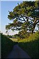 SS7601 : Mid Devon : Country Lane by Lewis Clarke