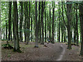 TR0150 : Path, Kings Wood by Robin Webster