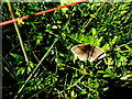 H6156 : Meadow brown butterfly, Tullybryan by Kenneth  Allen